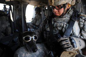 Army Service Dog