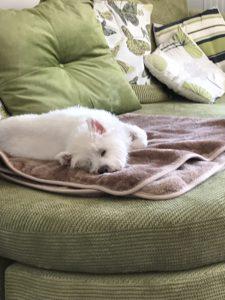 Dolly sleeping