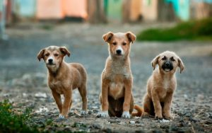 3 small terriers