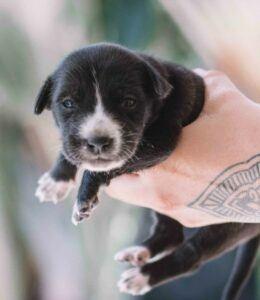 Single newborn puppy